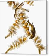 Audubon: Siskin Canvas Print