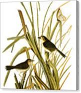 Audubon: Sparrow, (1827) Canvas Print
