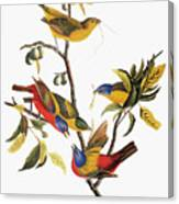 Audubon: Sparrows Canvas Print