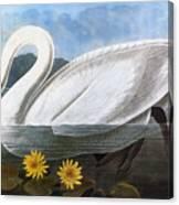 Audubon: Swan, 1827 Canvas Print