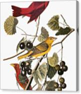 Audubon: Tanager Canvas Print