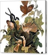 Audubon: Thrasher Canvas Print