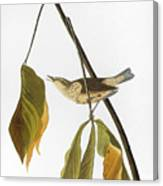 Audubon: Thrush, 1827 Canvas Print