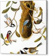 Audubon: Titmouse Canvas Print