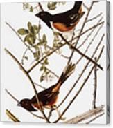 Audubon: Towhee Canvas Print