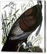 Audubon: Turkey Canvas Print