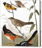 Audubon: Various Birds Canvas Print