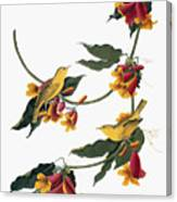 Audubon: Vireo, 1827-38 Canvas Print