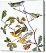 Audubon: Warbler, (1827-1838) Canvas Print