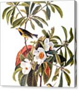 Audubon: Warbler, 1827-38 Canvas Print