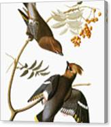 Audubon: Waxwing Canvas Print