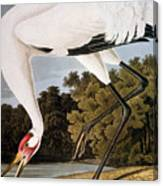 Audubon: Whooping Crane Canvas Print