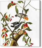 Audubon: Woodpecker, 1827 Canvas Print