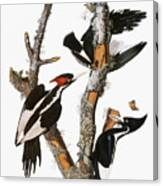 Audubon: Woodpecker Canvas Print