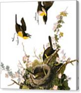 Audubon: Yellow Chat, (1827-38) Canvas Print