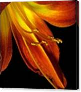 August Flame Glory Watercolor Canvas Print