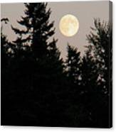 August Full Moon - 1 Canvas Print