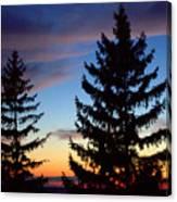 August Pine Clouds Canvas Print