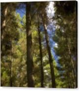 Aupouri Forest Canvas Print