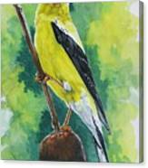 Aureate Canvas Print