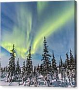 Aurora Borealis Over The Trees Canvas Print