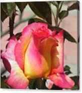 Aurora Color Rose Bud. Wow Canvas Print
