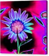 Aurora Daisy Canvas Print