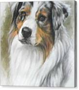 Aussie Shepherd Portrait Canvas Print
