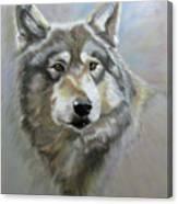 Austin's Wolf Canvas Print