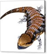 Australia Blue-tongued Skink Canvas Print