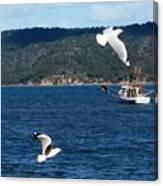 Australia - Seagulls And Trawlers Canvas Print
