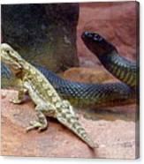 Australia - The Taipan Snake Canvas Print