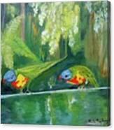 Australian Birds Canvas Print