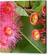 Australian Flora2 Canvas Print