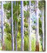 Australian Gum Trees Canvas Print
