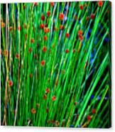 Australian Native Grass Canvas Print