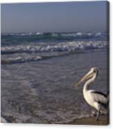 Australian Pelican And Surf Canvas Print