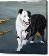 Australian Shepard Border Collie Canvas Print