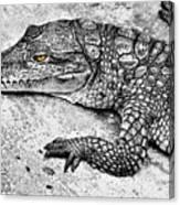 Australian Shy Crocodile  Canvas Print