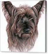 Australian Terrier Canvas Print