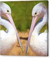 Australian White Pelicans Canvas Print