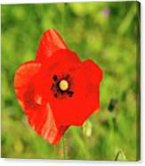 Austrian Poppy Canvas Print