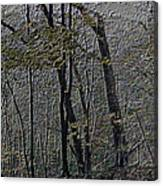 Autumn 2015 Panorama In The Woods Pa 01 Canvas Print