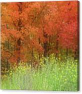 Autumn 3 - 16oct2016 Canvas Print