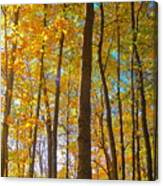 Autumn Afternoon Light Canvas Print