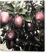 Autumn Apples - Luther Fine Art Canvas Print
