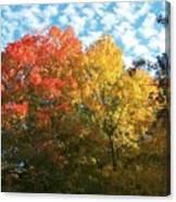 Autumn At Beaver Dam Canvas Print