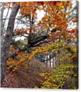 Autumn At Beech Forest Canvas Print