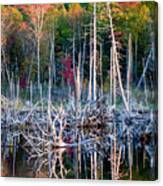 Autumn At Moosehead Bog Canvas Print