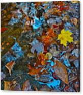 Autumn B 2015 123 Canvas Print